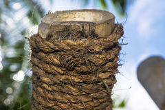 Preview Rope lap around bamboo at the sun, blurred sky background, close up. Rope lap around bamboo at the sun, blurred sky background, close up Royalty Free Stock Photos