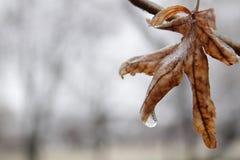 Previsão de tempo do inverno Imagens de Stock
