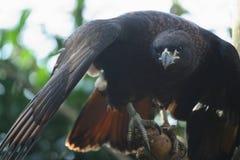 prey птицы Стоковые Фото