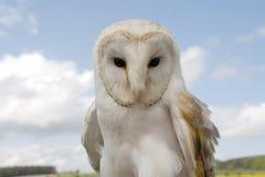 prey fenton центра птицы Стоковая Фотография