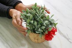 prezent daje, mężczyzna ręki mienia rośliny waza w gescie dawać o obrazy stock