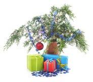prezent w tree Obrazy Royalty Free