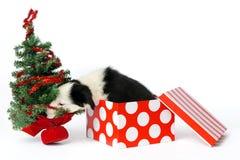 Prezenta bożenarodzeniowy szczeniak Obraz Royalty Free