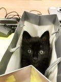Prezenta kota czerni dziecko na torbie Duzi oczy zdjęcia royalty free