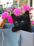 Prezenta kota czerni dziecko na torbie z różami na fundal obrazy royalty free