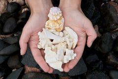 prezenta ocean Fotografia Stock