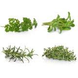 Prezzemolo erbe prudenti del timo e della Rosemary Fotografie Stock