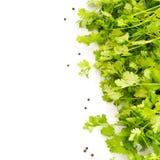 Prezzemolo fresco e peperoni isolati su backgr bianco Fotografia Stock Libera da Diritti