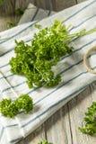 Prezzemolo riccio organico verde crudo Fotografia Stock Libera da Diritti