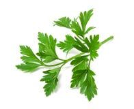 Prezzemolo verde fresco Immagini Stock