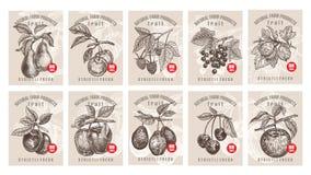 Prezzi da pagare per le bacche ed i frutti royalty illustrazione gratis