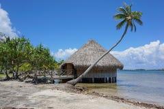 Prezzo tradizionale polinesiano tipico Potee dell'alloggio Fotografia Stock Libera da Diritti
