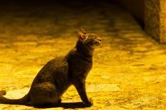Prière de Cat Meow photographie stock