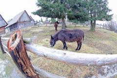 Pribylina - openluchtmuseum bij gebied Liptov, Slowakije Royalty-vrije Stock Fotografie