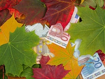 Price. Idea on a theme of price fall. Euro and autumn leaves Royalty Free Stock Image