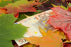Price-cutting. Idea on a theme of price-cutting. Euro and autumn leaves Royalty Free Stock Images