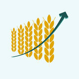 Price growth grain Royalty Free Stock Photo