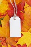 Price tag from recycled paper on twine string on autumn leaves Stock Photo