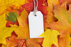 Price tag from recycled paper on twine string on autumn leaves Stock Photography