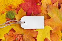Price tag from recycled paper on twine string on autumn leaves Royalty Free Stock Photos