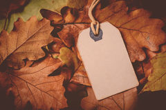 Price tag from with twine on dry autumn leaves background Royalty Free Stock Photo