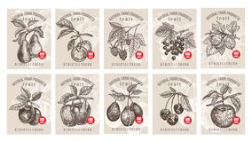 Price tags for berries and fruits. Labels with various fruits, berries and inscriptions. Set templates price tags for shops and markets of organic vegetarian Stock Photo