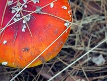 Prickig giftsvamp i skogen Arkivbilder