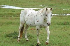 prickig häst arkivfoto