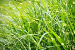 Prickig ny bakgrund för grönt gräs royaltyfria foton