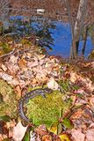 Prickig salamander Northwoods Michigan royaltyfri bild