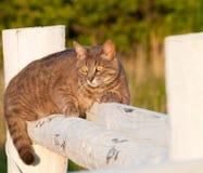 prickig tabby för blå katt Royaltyfria Foton