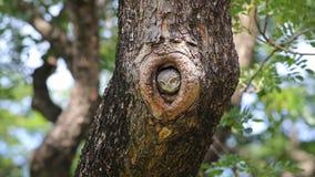 Prickiga fåglar för uggleungeAthenebrama i trädfördjupning lager videofilmer