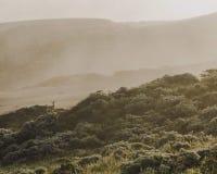Prickiga hjortar på en kust- dimmig morgon royaltyfria foton