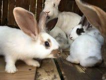 Prickiga kaniner som spelar i en bur arkivfoton