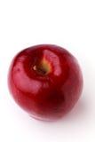 Prickigt äpple med en stam Royaltyfri Bild