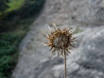 prickle Foto de Stock Royalty Free