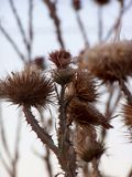 Prickle04 Fotografia Stock