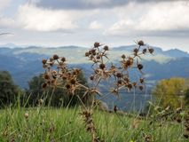 Prickle. Photo of a thorn in the background of mountains. Spain Royalty Free Stock Photos