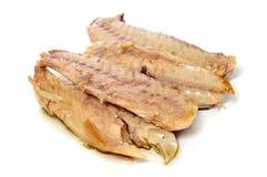 Prickled mackerel Stock Images