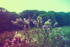 Prickles na lato łące colour gradient obrazy royalty free
