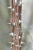 Prickles on a plant Stock Photography