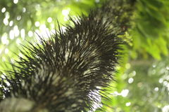 Prickles Royalty Free Stock Photography