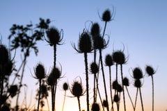 Prickles roślina obraz stock