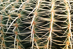 Prickles and thorns Stock Photo