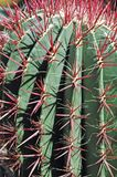 Prickly! Stock Image