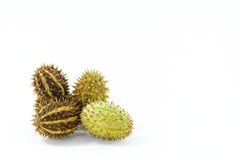 Prickly. Close view of four prickly fruits with copyspace Stock Photos