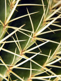 Prickly... Stock Images