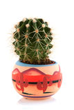 Prickly cactus Stock Photos