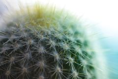 Prickly cactus, close up green macro shot. Garden Royalty Free Stock Photos