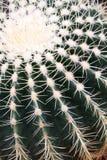 Prickly Cactus Plant stock photography